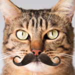 Profile photo of Frankie